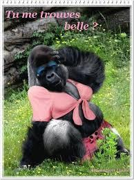 """Résultat de recherche d'images pour """"bonobo gif"""""""