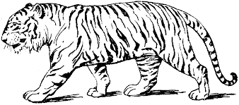 Small Picture Tiger Coloring Page Gallery Coloring Page Design zaenalus