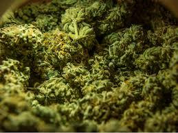 buy weed online Michigan buy weed online Washington buy weed online Oregon buy weed online Arizona buy weed online Delaware.