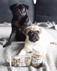 pug gifts gift ideas for pugs pug lover gifts