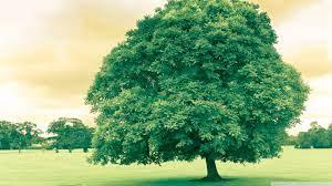 Green Tree Ultra HD Desktop Background ...
