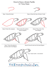 Small Picture How to Draw a Green Turtle
