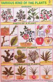 Plant Chart Various Kind Of Plants Herbs Shrubs Chart Number 132