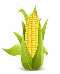 ear of corn clipart.  Corn Corn Clipart Ear And Ear Of Corn Clipart