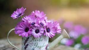Desktop wallpaper purple flowers ...