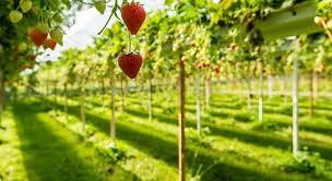 Resultado de imagen para produccion agricola local europa