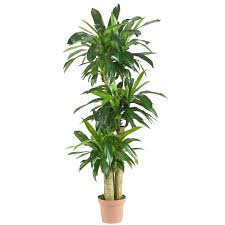 tall office plants. Wonderful Plants Tall Office Plants Low Light Indoor Intended