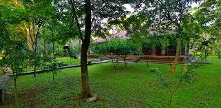 all inclusive safari tours in wilpattu from palm garden hotel in anuradhapura wilpattu safari tours