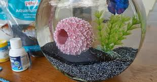 Fish Bowl Decorations Ideas Cool glass fish bowl decorations ideas and tips 2