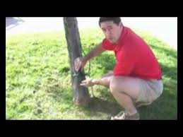 lighting outdoor trees. Outdoor Tree Lighting - Professional Christmas Light Installers In Sacramento YouTube Trees