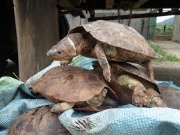 что означает черепашка на браслете черепаха символ мудрости и
