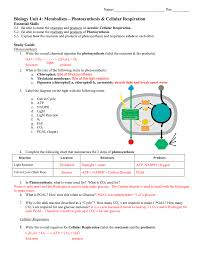 study guide unit 4 photosynthesis and cellular respiration