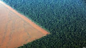 amazon rainforest deforestation. Fine Rainforest FILE  The Amazon Rainforest Bordered By Deforested Land Prepared For The  Planting Of Soybeans In Rainforest Deforestation I