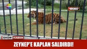 Zeynep'e kaplan saldırdı! - YouTube