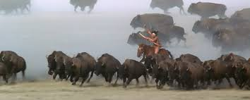 i m an n too a sioux ldquo dances wolves rdquo so few the magnificent buffalo hunt