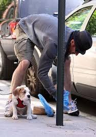 В Мариуполе произошла стрельба из-за собаки, ранен мужчина, - Аброськин - Цензор.НЕТ 9738