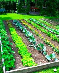vegetable garden plan examples new ve able and herb garden layout