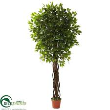 silk plants direct outdoor ficus tree green pack of 1 pruning long narrow green leathery leaves on to enlarge outdoor ficus tree