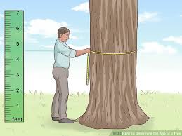 Oak Tree Growth Rate Chart 2 Easy Ways To Determine The Age Of A Tree Wikihow