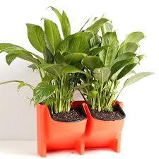 artificial vertical wall garden bunnings 2 pocket planter self watering hanging flower pot for indoor