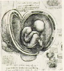 Леонардо да Винчи анатомические рисунки сердце плод череп кости Леонардо да Винчи Анатомические рисунки