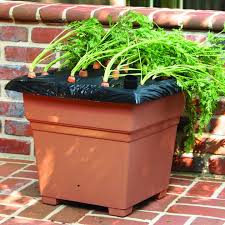 earthbox root veg homegrown vegetable container gardening system earthbox garden