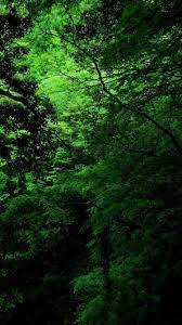 Green Nature iPhone Wallpapers ...
