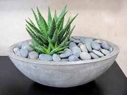 concrete succulent bowl