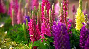 spring nature backgrounds. 0 1680x1050 Spring HD Desktop Wallpaper 1920x1080 Widescreen Nature Backgrounds W