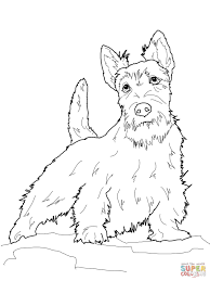 Small Picture Scottish Terrier coloring page Free Printable Coloring Pages