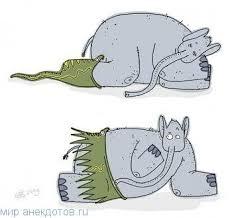 Прикольные анекдоты про льва Мир анекдотов Лучшие анекдоты про лес · Прикольные анекдоты про слона