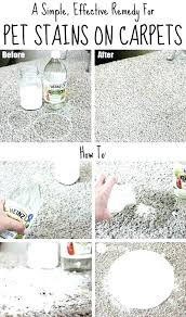 pet stains on wool carpet how to get stains out of rugs this is the best
