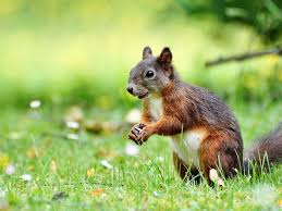 Squirrel Removal | Duxbury, Plymouth, Kingston & Sandwich, MA | Expert Wildlife  Removal
