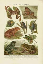 Antique Print Frogs And Toads Chart 1907 Beautiful Wall