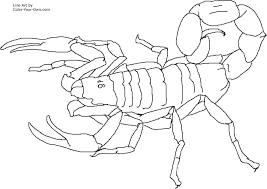 Small Picture Scorpion Coloring Pages GetColoringPagescom