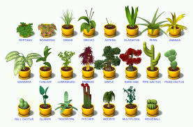 Plant Tycoon Flower Chart Any One Have A Picture Guide To The Plants Last Day Of