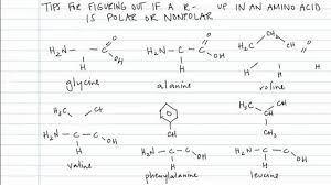 Determining If A R Group In An Amino Acid Is Polar Or Nonpolar Concept