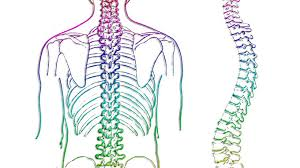 Scoliosis and Spinal Curvatures