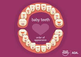 Teething Chart Babies Baby Teeth American Dental Association