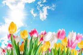 spring tulip desktop wallpaper. Unique Desktop Spring Tulips And Tulip Desktop Wallpaper U