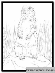 Prairie Dog Standing Up Friv Free Coloring Pages For Children