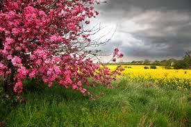 תוצאת תמונה עבור flowers nature