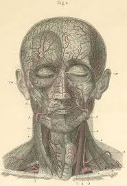 arteries of the face vintage illustration arteries of the face and the anterior surface