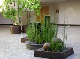Interior management of plants in an atrium in building in Larkspur