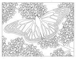 Vlinder Kleurplaat Stockfoto Smk0473 128344998