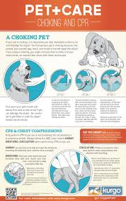 Free Printable Pet Cpr And Emergency Dog Pet Medical