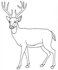 Small Picture Coloring Pages Draw A Deer Coloring Page
