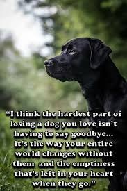 Quotes About Dogs Extraordinary Juno Email On The Web Quotations 48 Pinterest Dog Animal And