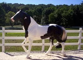 black and white paint horse wallpaper.  Wallpaper Side Winder The Paint Horse  Breyer Horse Model Paint Black Plastic With Black And White Paint Horse Wallpaper