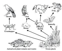 Food Chain Coloring Pages Web Healthy Eating Ocean Page Desert